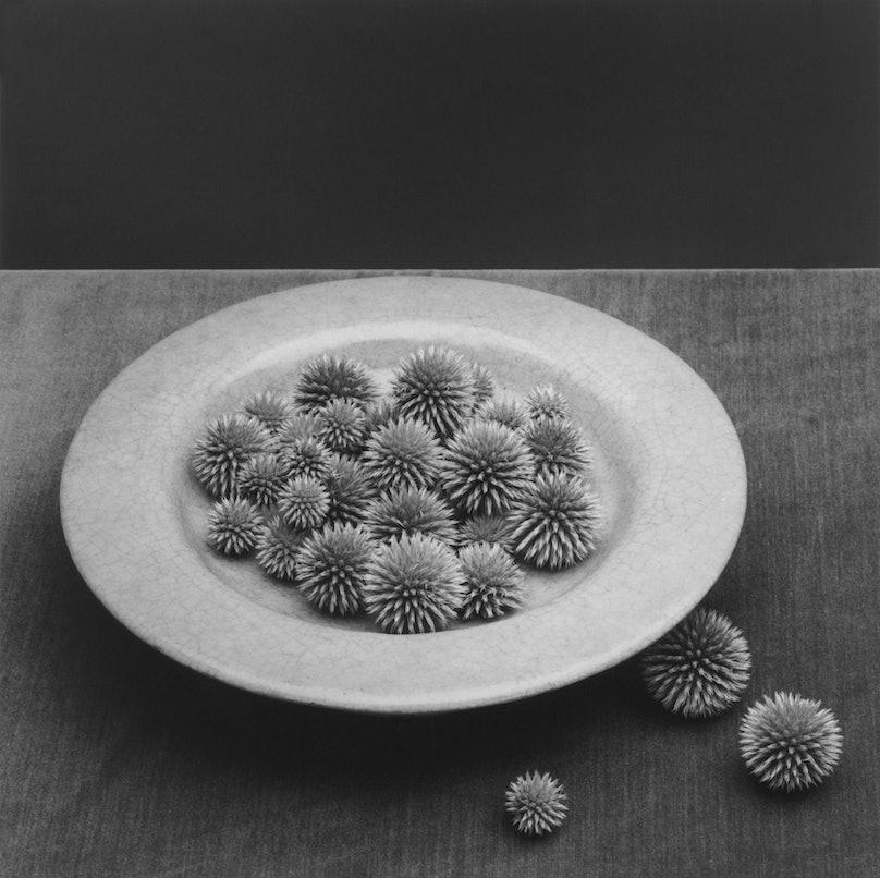 Robert Mapplethorpe, Pods, 1985.jpg