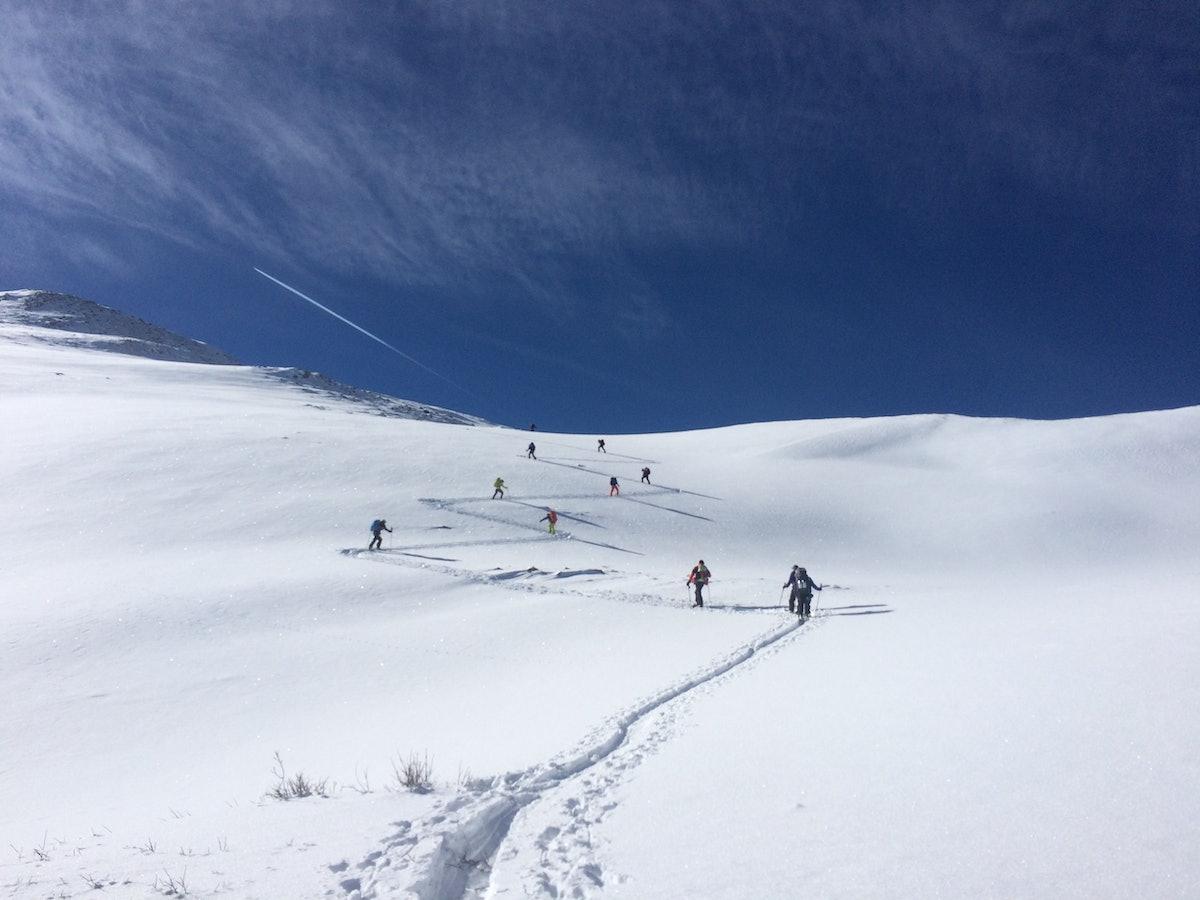alpine.jpeg