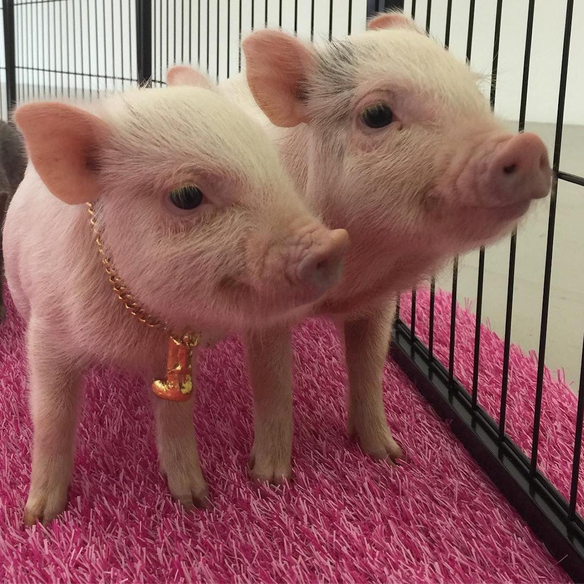 bjarne-pigs.jpg