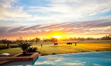 sunrise_horses(katiepark).jpg
