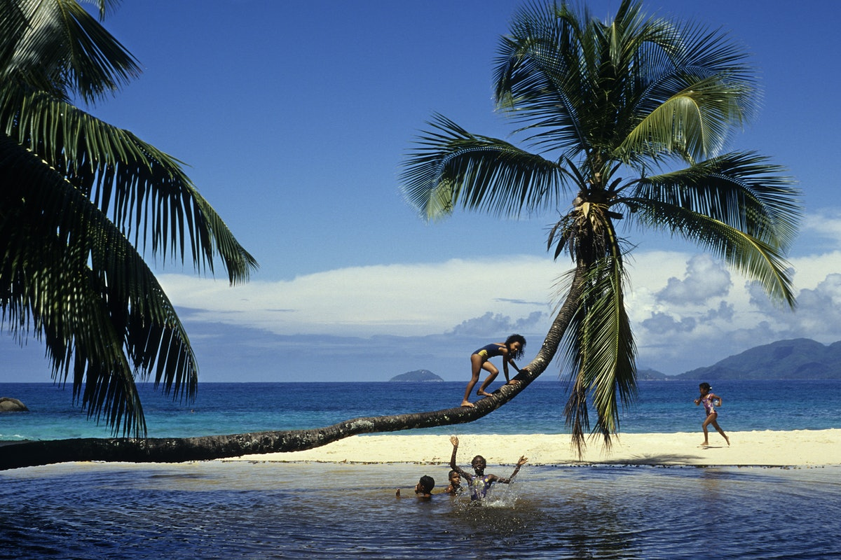Children Playing On a Coconut Tree