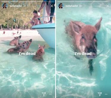 bella-pigs-bahamas.jpg