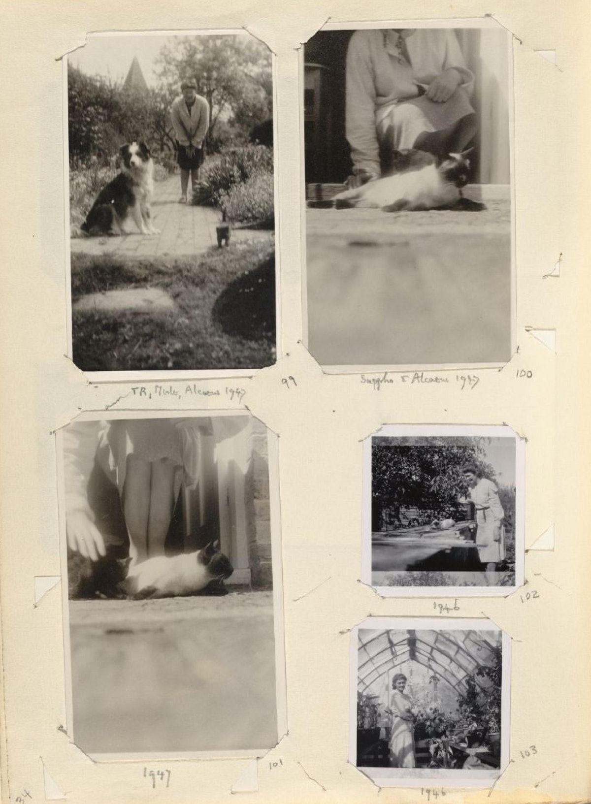 virginia-wolf-15-page-001.jpg