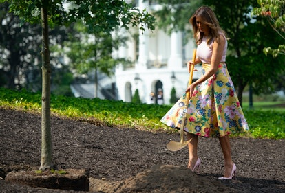 US-politics-TRUMP-TREE