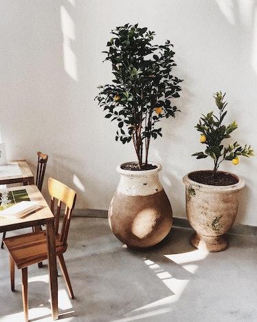 jacquemus-cafe-8.jpg