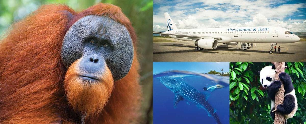 Wildlife-Safari-Private-Jet-Around-World-mh.jpg