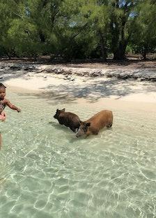 pig-beach-feral-hog-khloe.jpg
