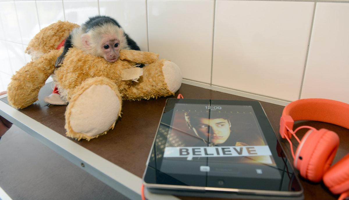 Justin Bieber's monkey at animal shelter in Munich