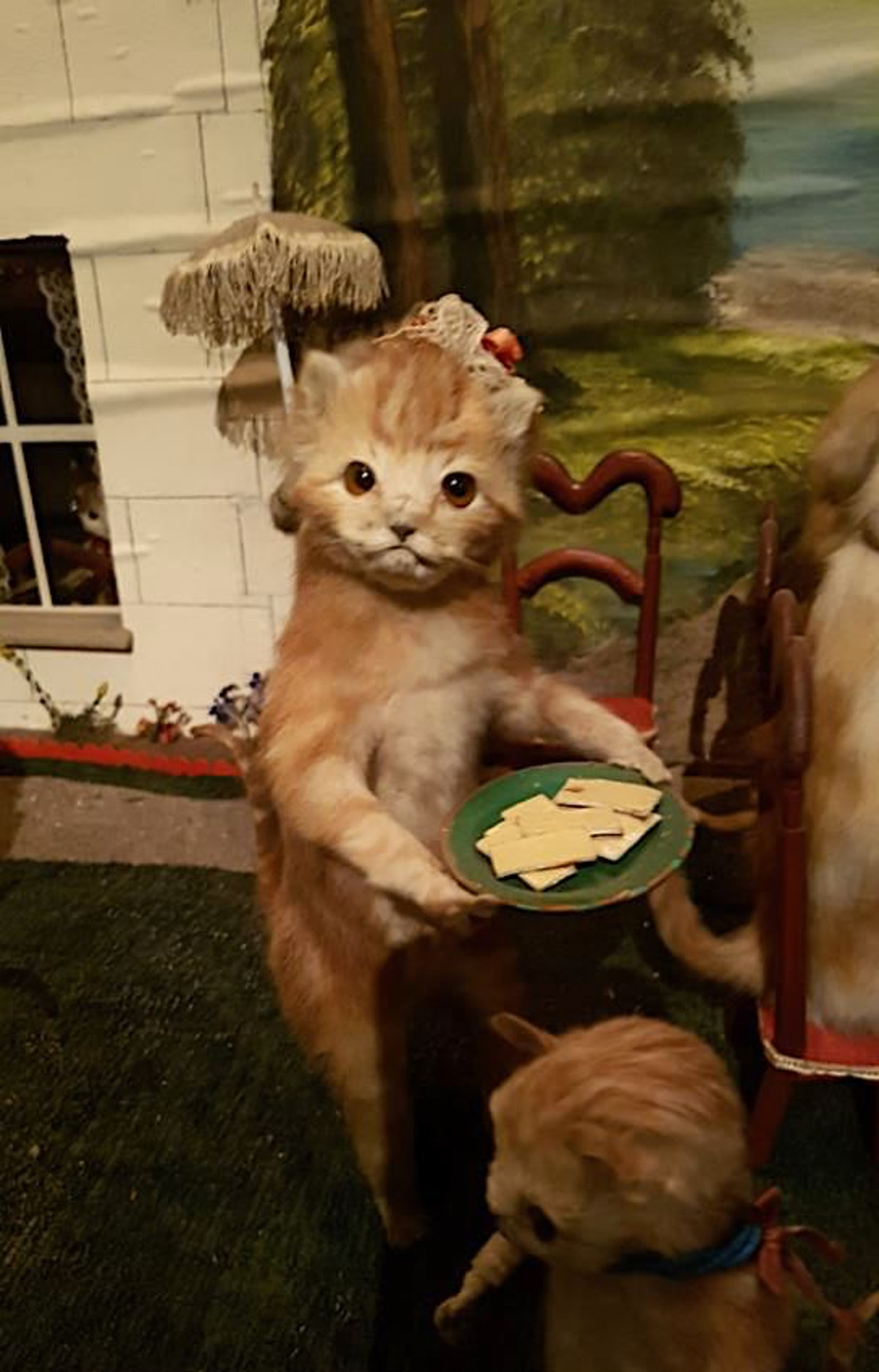 A taxidermical cat