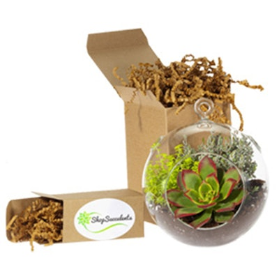 Large Glove Terrarium Kit