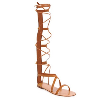 Knee-High Flat Gladiator Sandal
