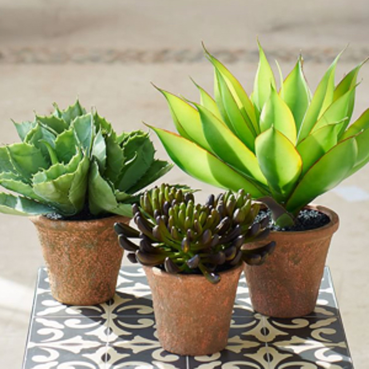 Potted Large Agave Succulent