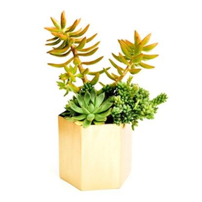 Brass Hexagon Planter