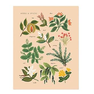 Herbs & Spices Print
